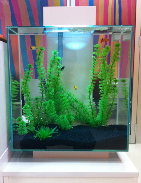It's a fish tank, now with fish in it! What a concept!